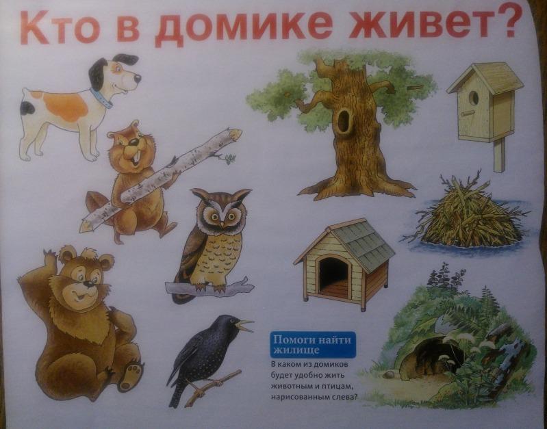 igry-na-vnimanie-dlya-malyshej   www.u-children.ru 2